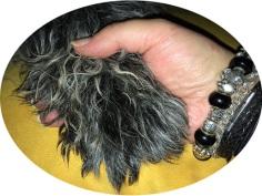 Hundeschule Mold
